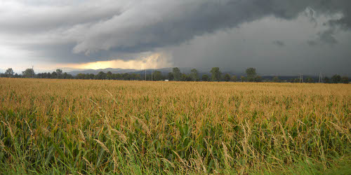 Sometimes, the clouds bring more than rain. White Insurance has been serving farms and farmers for decades.